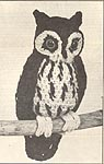 Annie's Attic Birds of a Feather: Screech Owl, original black and white version