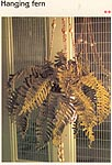 Marshall Cavendish LTD Hanging Fern